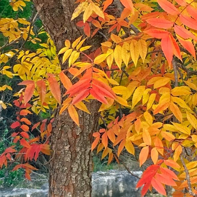 Park Tree FallPL